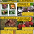 Raspberry Comic