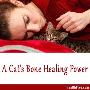 cat's bone healing power