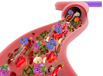 blood and lymph system with herbs