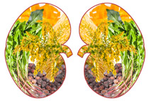 Kidney with herbs illustrations