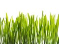 Vital Nutrition Plus A Raw Organic Amp Wild Harvested Whole